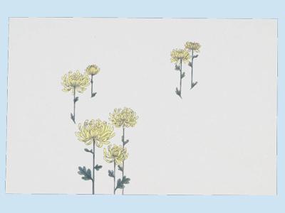 掛紙 (弔事用) 菊 中