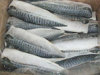 冷凍 ノルウェー サバフィーレ 50尾 (5kg)
